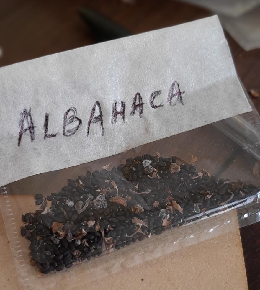 Bolsita de semillas de albahaca